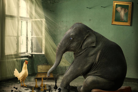 elephant-chess-ethiriel-photography