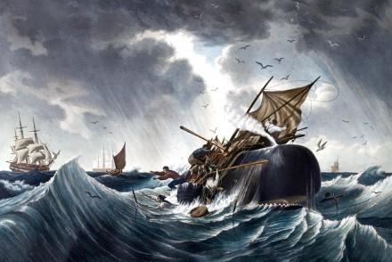 walvisaanval