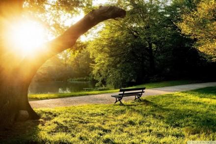 green-grass-park-bench
