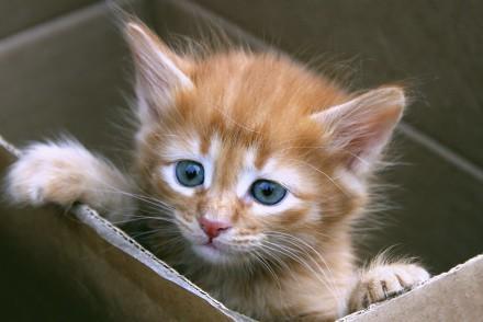 4244190-kitten